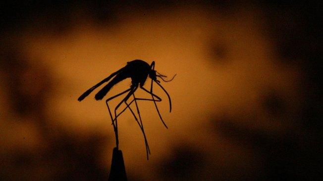 Conn.'s First Human Case of West Nile Virus Identified for 2016