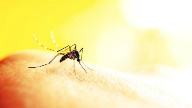 Maine's Angus King Submitting Bill to Fight Zika