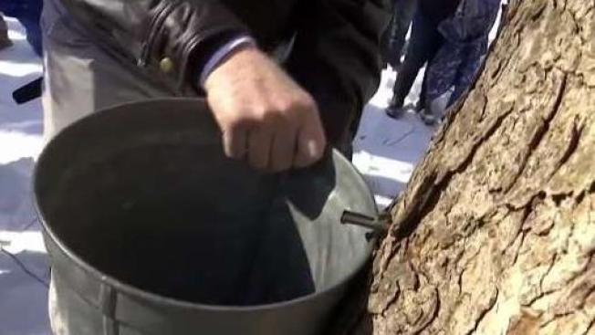 Thief Steals 140 Sap Buckets in Vermont