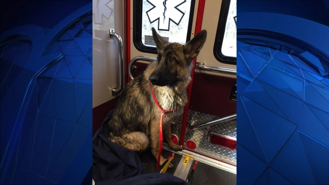 Volunteer Firefighters Rescue Dog From Icy Pond