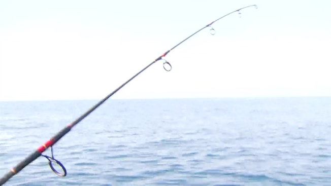 No Cod Possession for Gulf of Maine's Recreational Fishermen