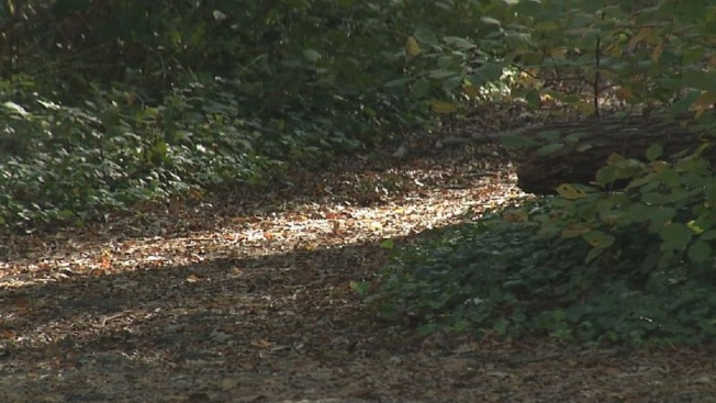 Body Found on State Forest Trail
