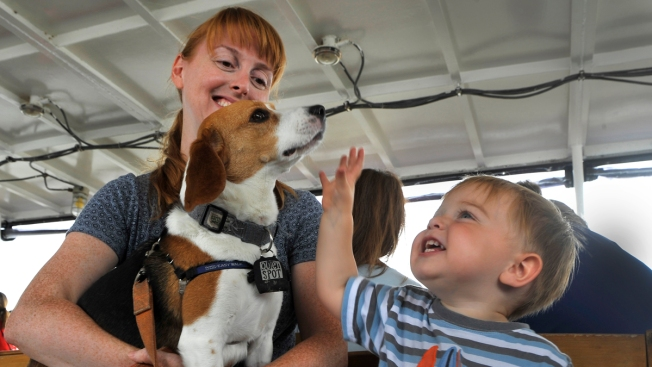 Pet Adoption 101: What to Do Before, During and After a Shelter Visit