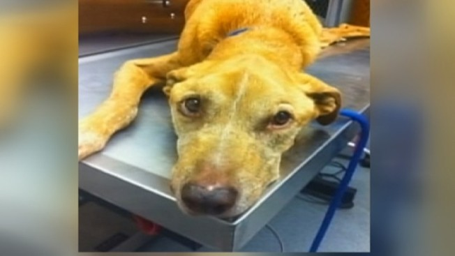 Man Who Abandoned Malnourished Dog Gets Year Of Probation