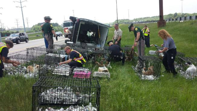 Van Carrying Dozens of Animals Flips Over on Interstate