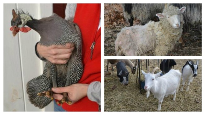 Police Seize 36 Animals Suffering From Suspected Neglect