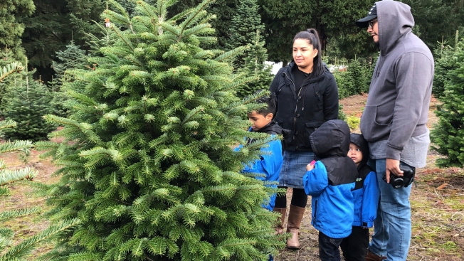 Christmas Tree Farmers Combat Popularity of Artificial Trees