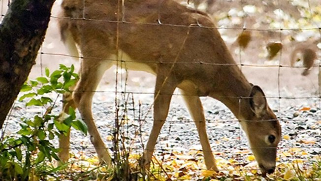 Vermont Deer Hunting Rules Under Consideration