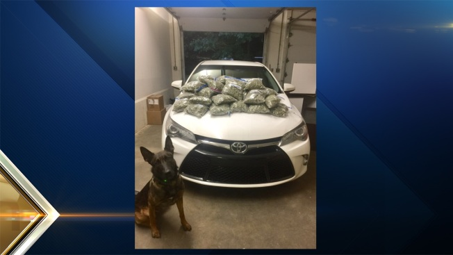 Police K9 Sniffs Out 30 Lbs. of Marijuana in Vehicle's Trunk