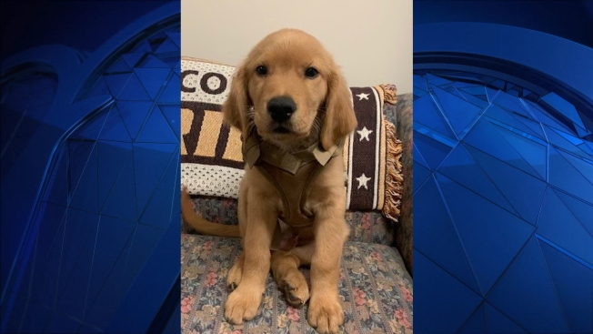 Meet 'Deputy Forest': NH Sheriff's Office Introduces New Puppy
