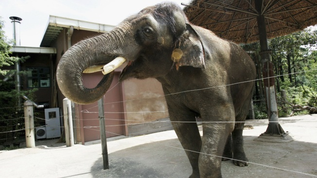 Conn. Court to Hear Arguments in Elephants' Rights Case