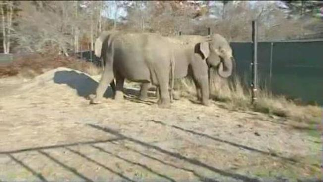 No Citation After Maine Elephant Keeper's Death