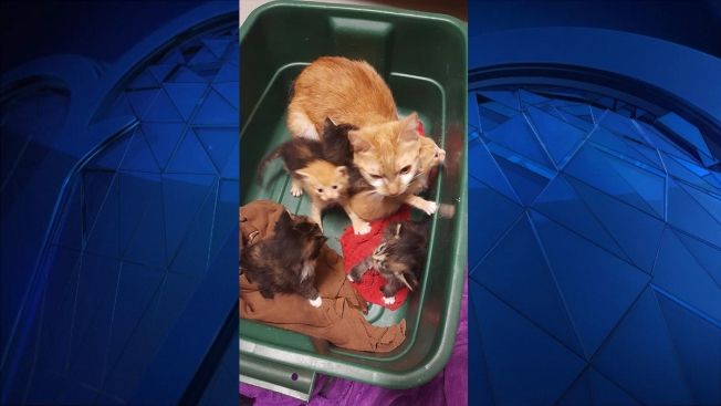 Cat, Kittens Found in Box on Side of Road