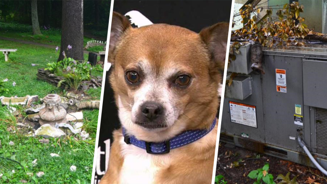 Lightning Causes $30K of Damage to New York Animal Shelter