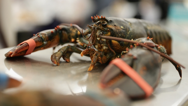 Lobster Bait Shortage Prompts Change for Herring Fishery
