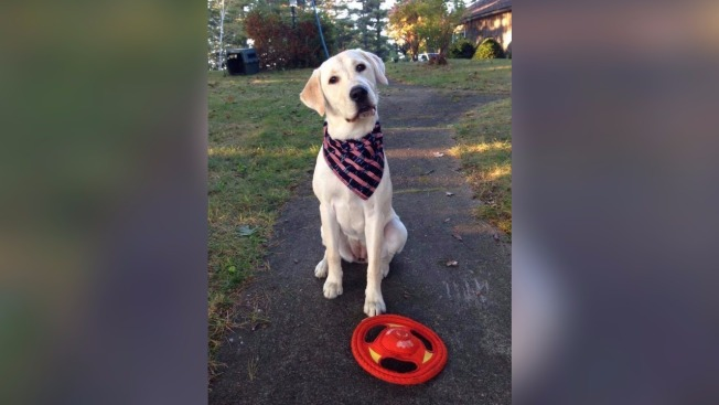 Driver Who Hit, Killed Dog in Winthrop, Maine, Comes Forward