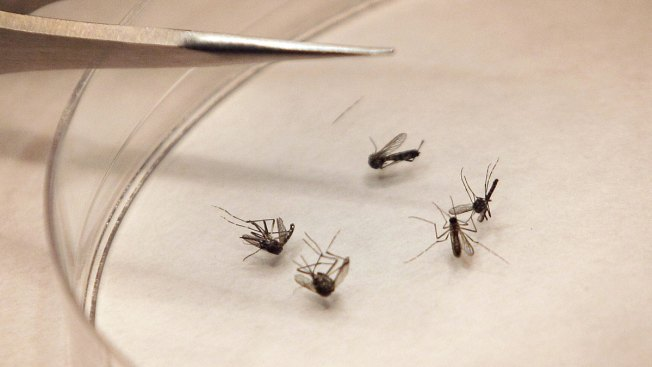 No West Nile Virus Found in Latest RI Mosquito Tests