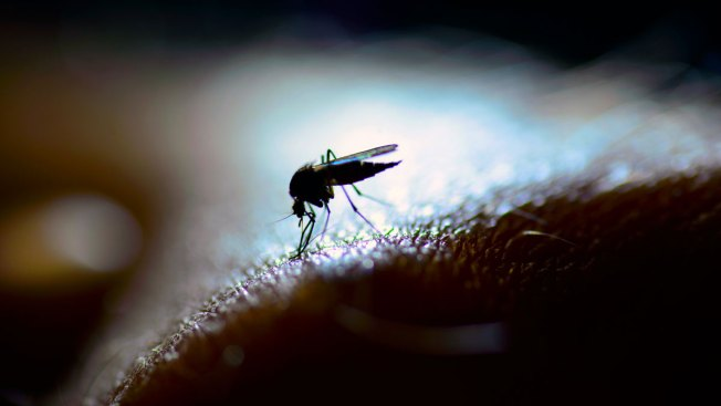 3rd Human Case of West Nile Virus Confirmed in Mass. This Year