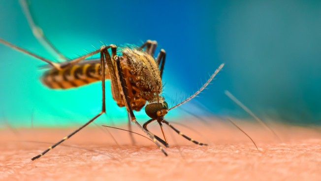 Mosquito That Can Spread Zika, Dengue Viruses Found in New England