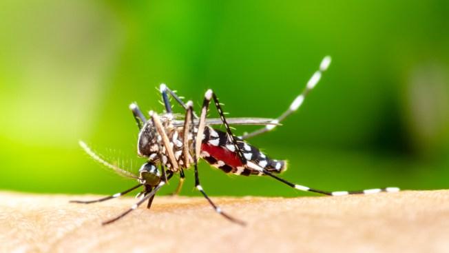 Anti-Mosquito Spraying Scheduled in Rhode Island
