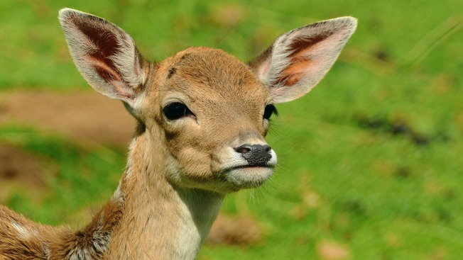 Residents Protest Plan to Have Archers Kill 20 Deer on NH's New Castle Island