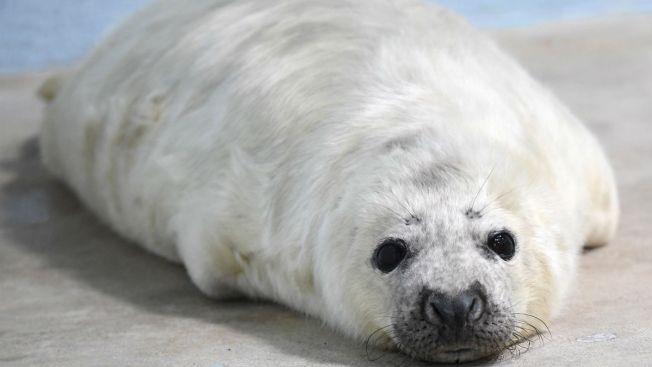Please, No Selfies With Seals: NOAA