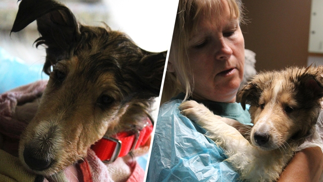About 50 Animals Seized From Maine Property Set for Adoption, Shelter Says
