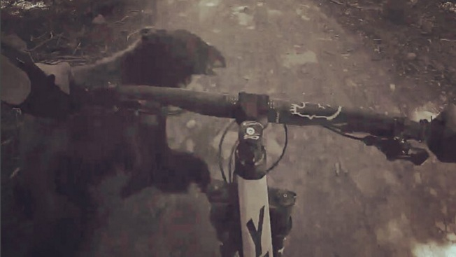 Caught on Video: Mountain Biker Crashes Into Bear