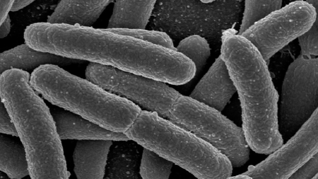 CDC Testing to Determine Possible E. Coli Link in Maine