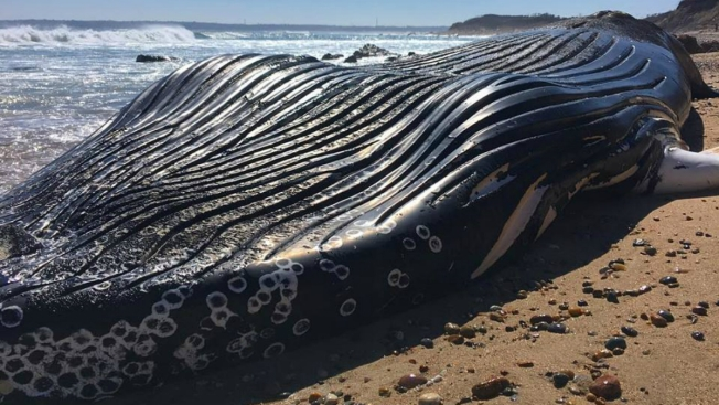 Whale Washes Up Dead on Rhode Island Beach