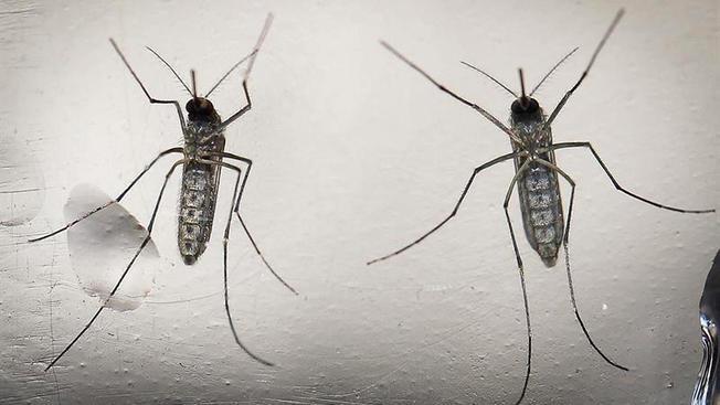 First Case of Zika Virus Confirmed in Rhode Island