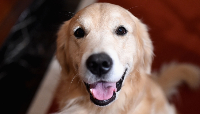 Lab Report: Gene Researchers Map Out Dog Family Tree