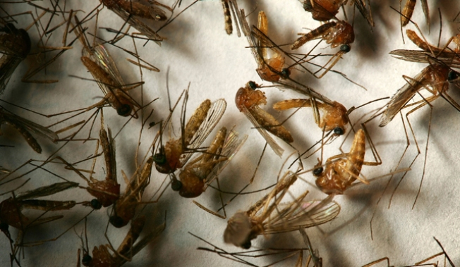 West Nile Virus Found in RI Mosquitoes