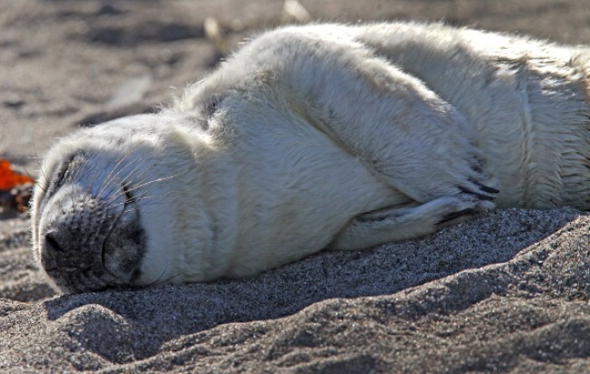 Beachgoers Reminded Not to Touch Baby Seals Along New England Coast