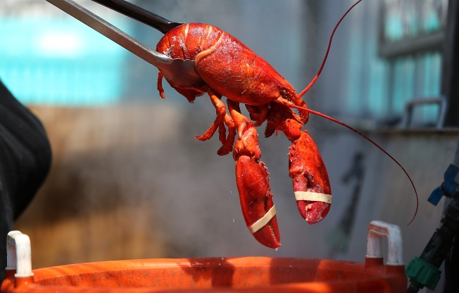 Man Stentenced to Jail for Under-the-Table Dealing of Lobsters