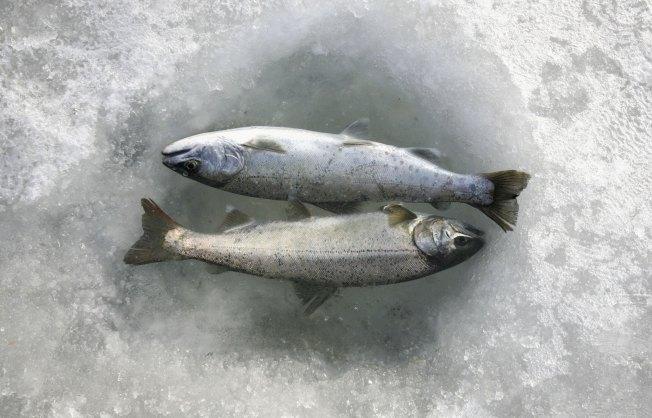 School Board Avoids Trial in Frozen Fish Assault