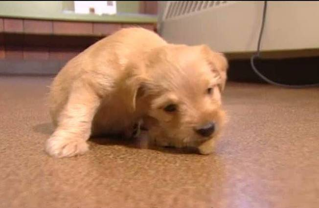 Puppies Abandoned On Side Of Road In Maine Necn