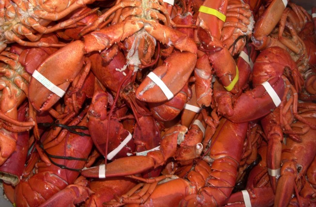 Maine Fishermen Set Lobster Record for Seventh Straight Year