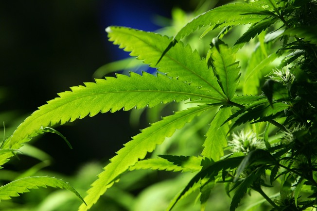 Man Confesses to Role in Pot-Growing Operation