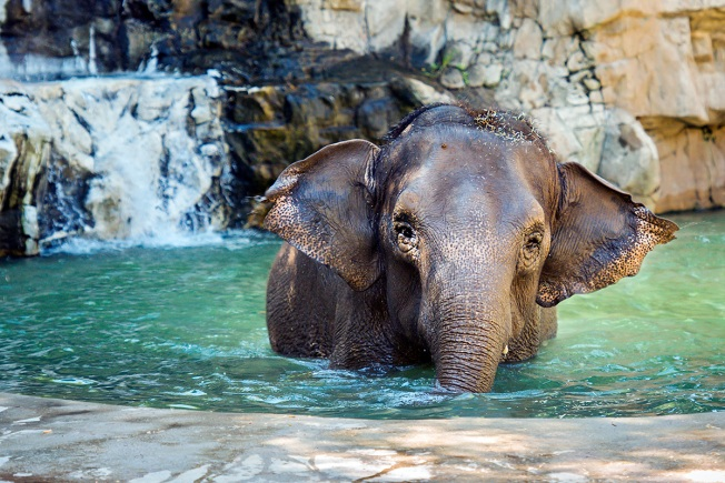 Finding Friends: Lonely Elephant Arrives at Los Angeles Zoo