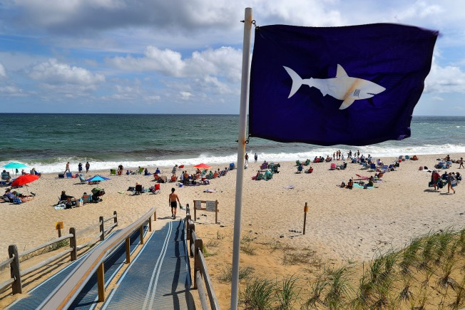 Shark Sighting 15 Yards Off Nauset Beach Closes Waters to Swimmers