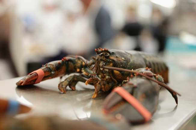 Lobster Fishing to Be Restricted in Bid to Save Population
