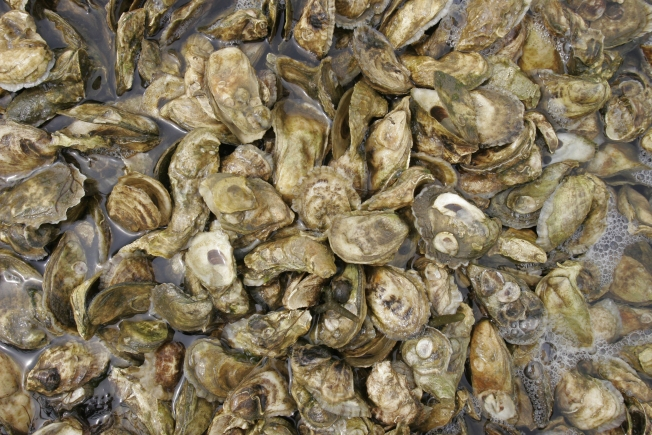 Shellfishing Ban Lifted in Rhode Island