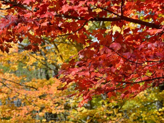 Peak Fall Foliage Season Arrives in Northern Maine