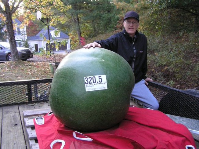 Giant Gourd Grown in Mass. Nearly Sets World Record