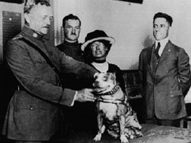 Monument Honors Famous WWI War Dog Stubby