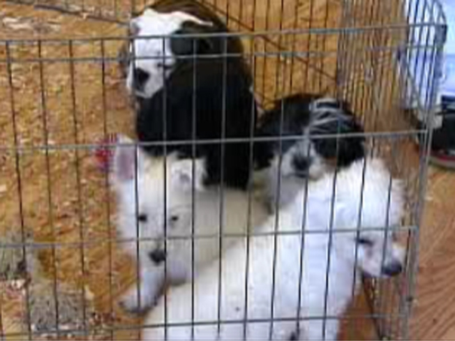 "House Supports Bill Targeting ""Puppy Mills"""