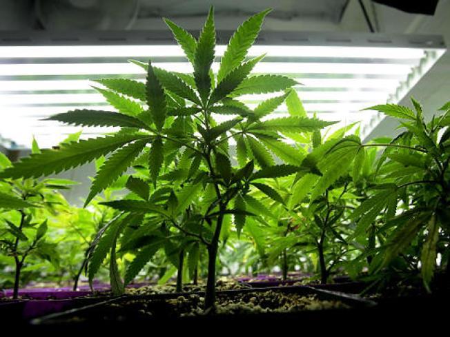 Senate Rejects Plan to Decriminalize Small Amounts of Pot