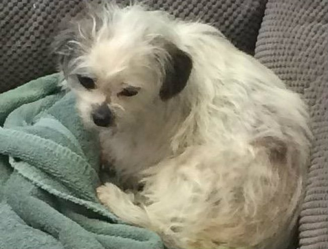 Small Dog Tossed From Car, Recovering at Shelter