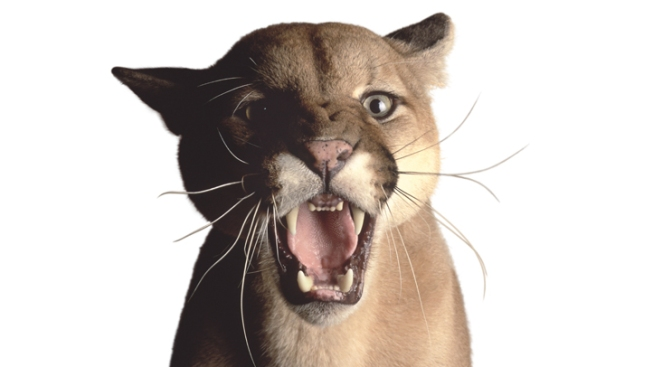 Feds Ready to Declare Eastern Cougars Extinct